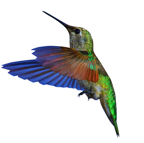 kisspng-bee-hummingbird-gif-portable-network-graphics-institut-chakana-5b7ec880d7abc9.5683674715350355208834